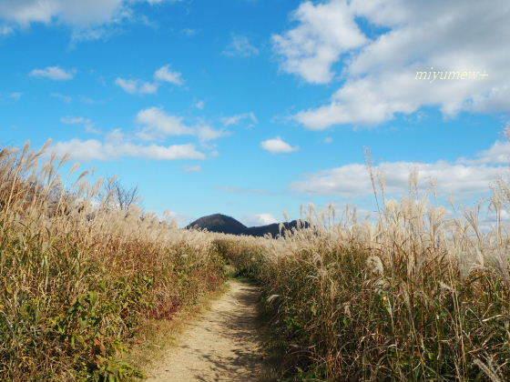 ススキの道201510