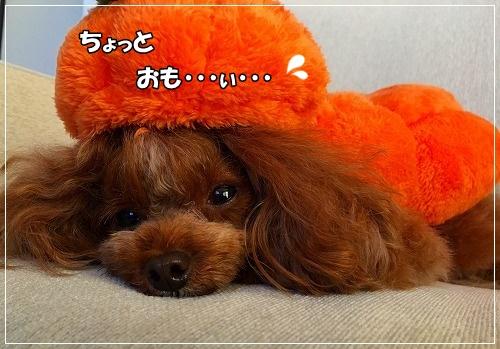 s-IMG_4107.jpg