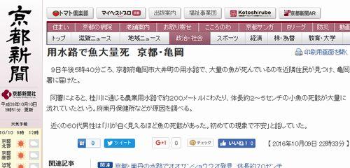 京都・亀岡市の用水路で「子魚」が大量死か…近隣住民「初めての現象で不安」