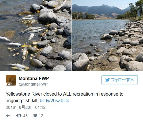 イエローストーンが噴火しそうって話し覚えてる?国立公園付近の川で「魚」が相次いで死んでいるのが見つかる