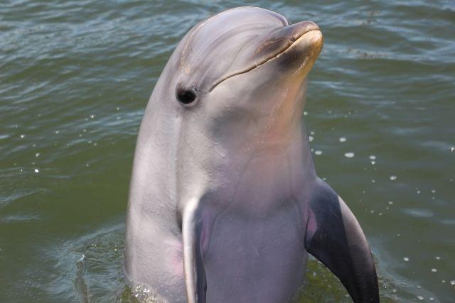 イルカの言語は「宇宙人」探索の鍵となる…宇宙の秘密を明らかにする