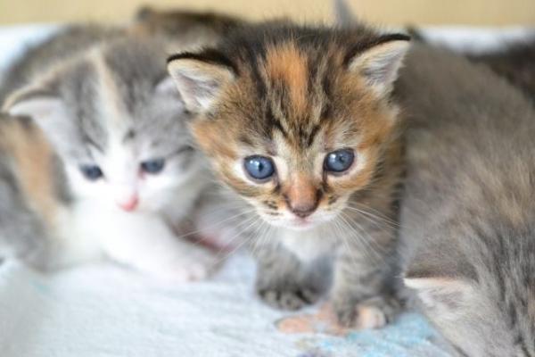 cat3654354.jpg