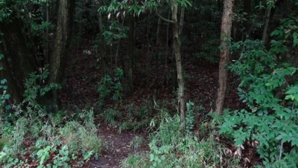 forest753783783784.jpg