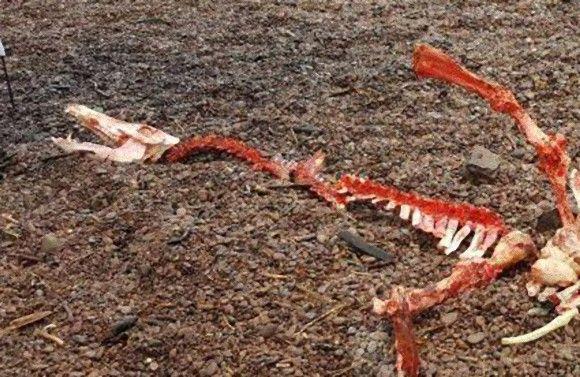 【UMA】ついにネッシーか?ネス湖のほとりに打ち上げられた首の長い「謎の巨大生物」を発見!