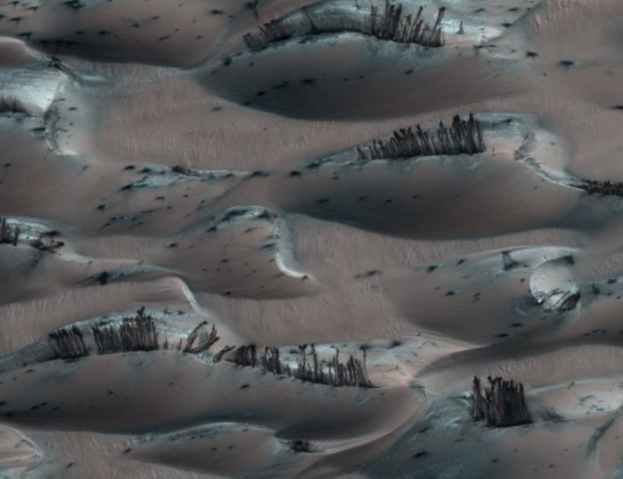 【謎】火星の地表に「植物」らしきものが群生している画像が見つかる!