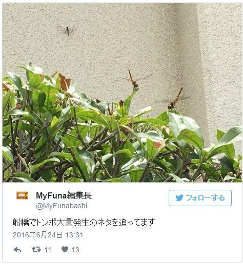 千葉県船橋市南部で「トンボ」が大量発生…ネット上で拡散され話題に