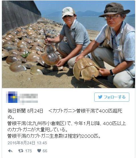 【福岡】北九州市・曽根干潟で「カブトガニ400匹超」が死んでいるのが見つかる…海水温上昇影響か