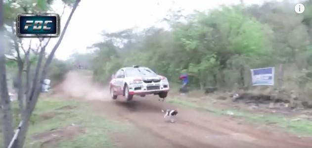 ラリーカーでのレース中にコースに迷い込んでしまった「犬」に奇跡が起きた!「幸運の犬だ!」「まさに奇跡だ!」と話題に