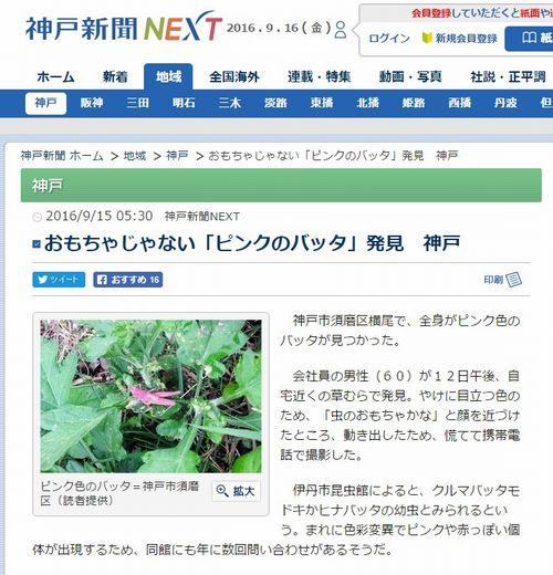 【レア】神戸でピンク色の姿をした「バッタ」を発見!