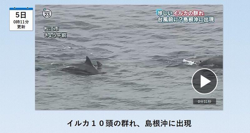 島根沖に「イルカ」10頭の群れが出現…「これだけ多くは珍しい」
