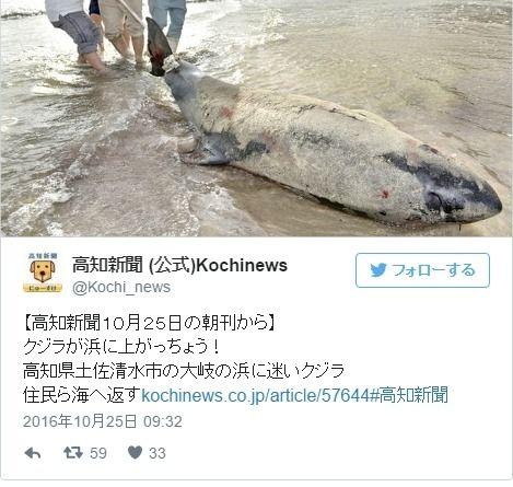 【南海トラフ】高知県土佐清水市の砂浜にクジラが打ち上がる…「生きて打ち上がったのは初めて見た」