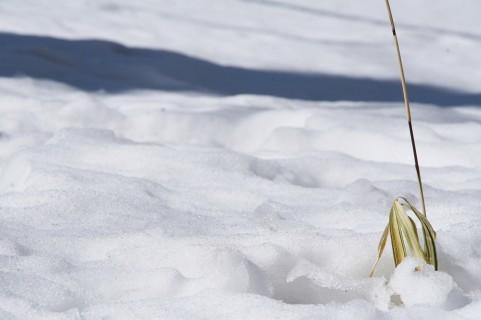 【北海道】11月上旬としては「44年ぶり」の大雪…帯広空港で積雪20センチを記録