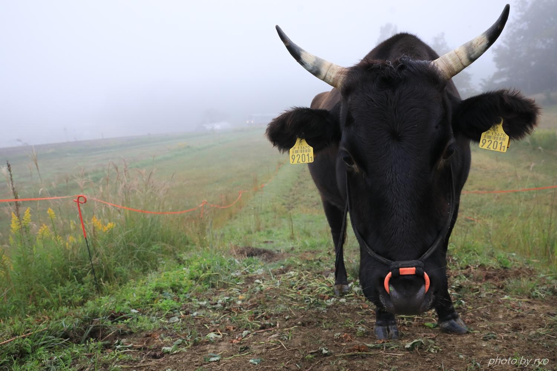 牛さんと一緒Ⅱ_1