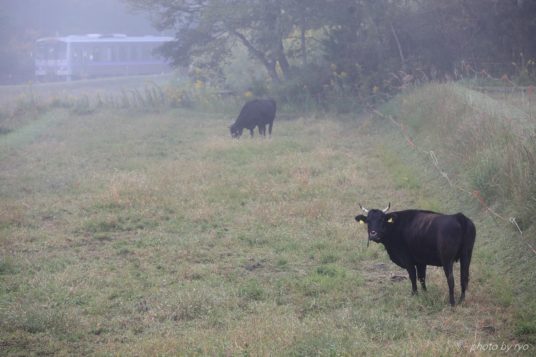 牛さんと一緒Ⅱ_3