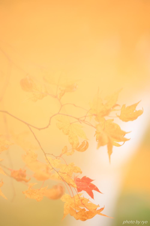 恋する白樺林_4