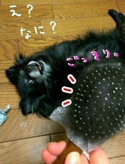 2016-11-03_20_59670.jpg