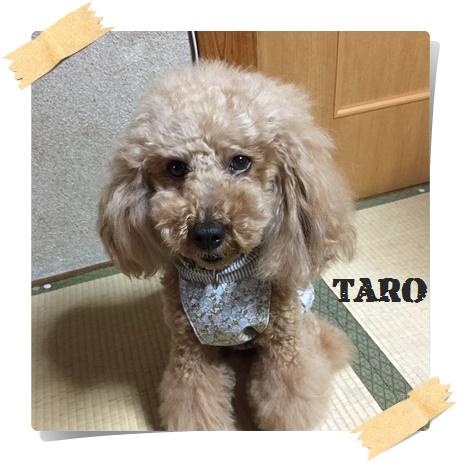 taro2.jpg