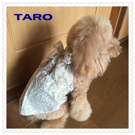 taro3.jpg