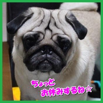 IMG_4124-1_20161019205304adc.jpg