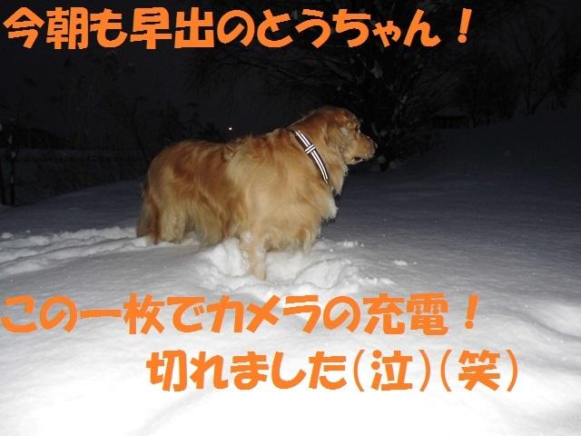 CIMG2846_P.jpg