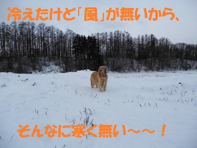 CIMG2858_P.jpg