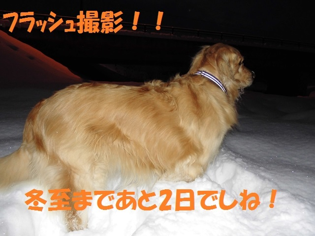 CIMG3004_P.jpg