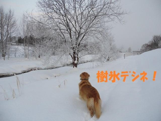 CIMG3009_P.jpg