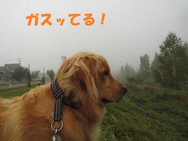 CIMG3318_P.jpg
