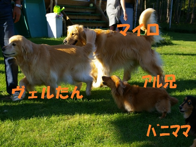 IMGP0057_P.jpg