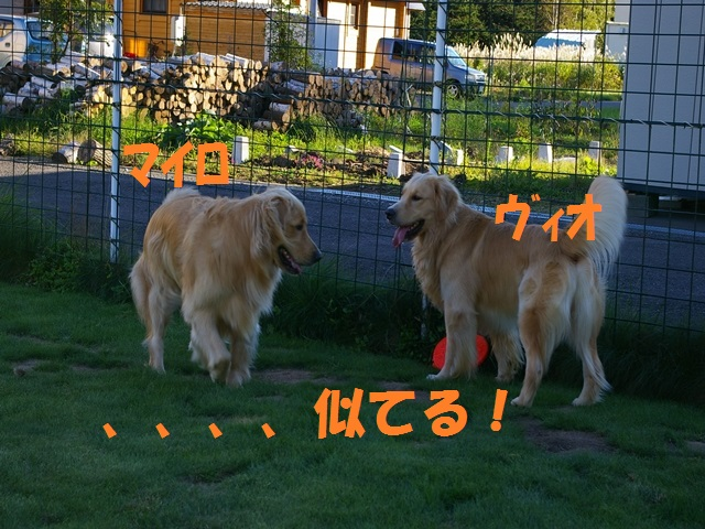 IMGP0080_P.jpg