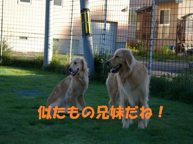 IMGP0139_P.jpg