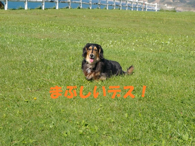 IMGP0190_P.jpg