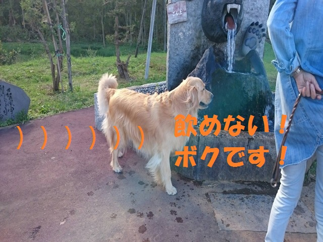 IMG_9352_P.jpg