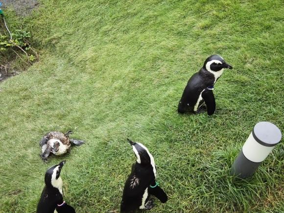 マリンワールド 福岡 海の中道 ペンギン