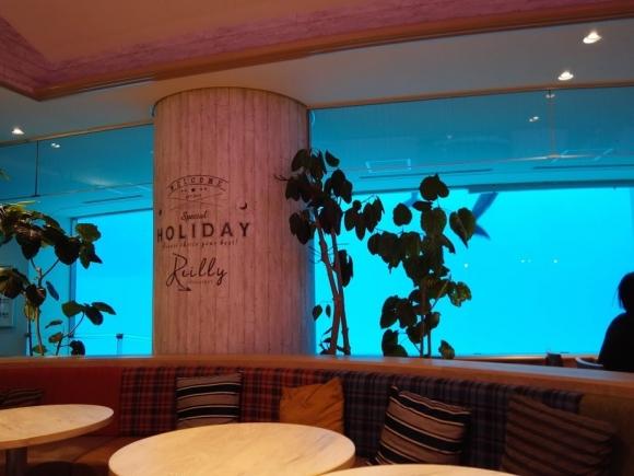 マリンワールド 福岡 海の中道 海中レストラン イルカ