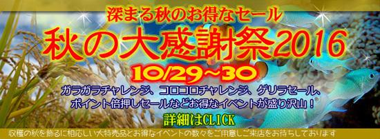 201610aki_banner.jpg