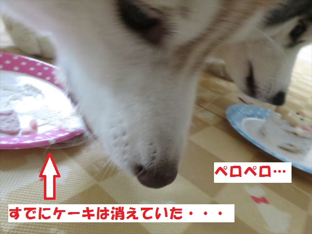 IMG_7577_R280805.jpg