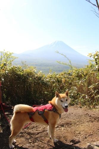 竜ヶ岳15