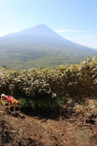 竜ヶ岳19