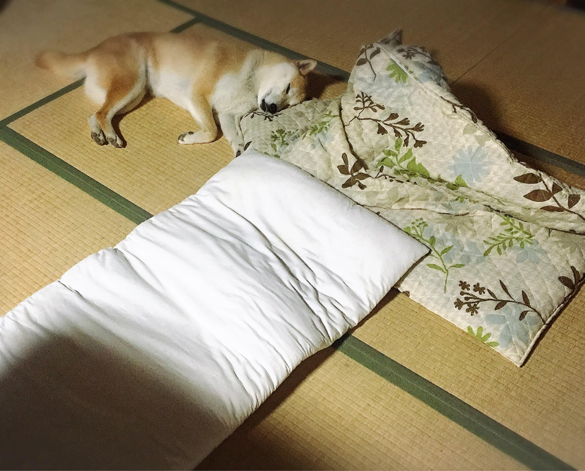 心が和む瞬間(芝生の成長&サボテンの花&さくらの寝姿)