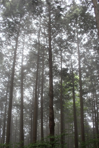 大霧山21