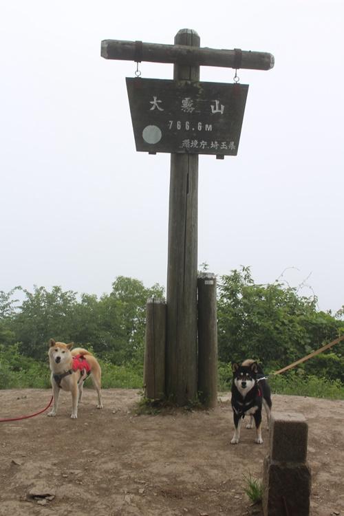 柴吉ちゃんと大霧山登山①(粥新田峠→山頂)