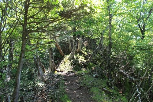 笠取山下山7