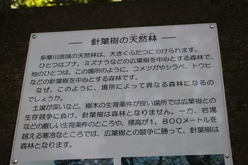 笠取山下山12