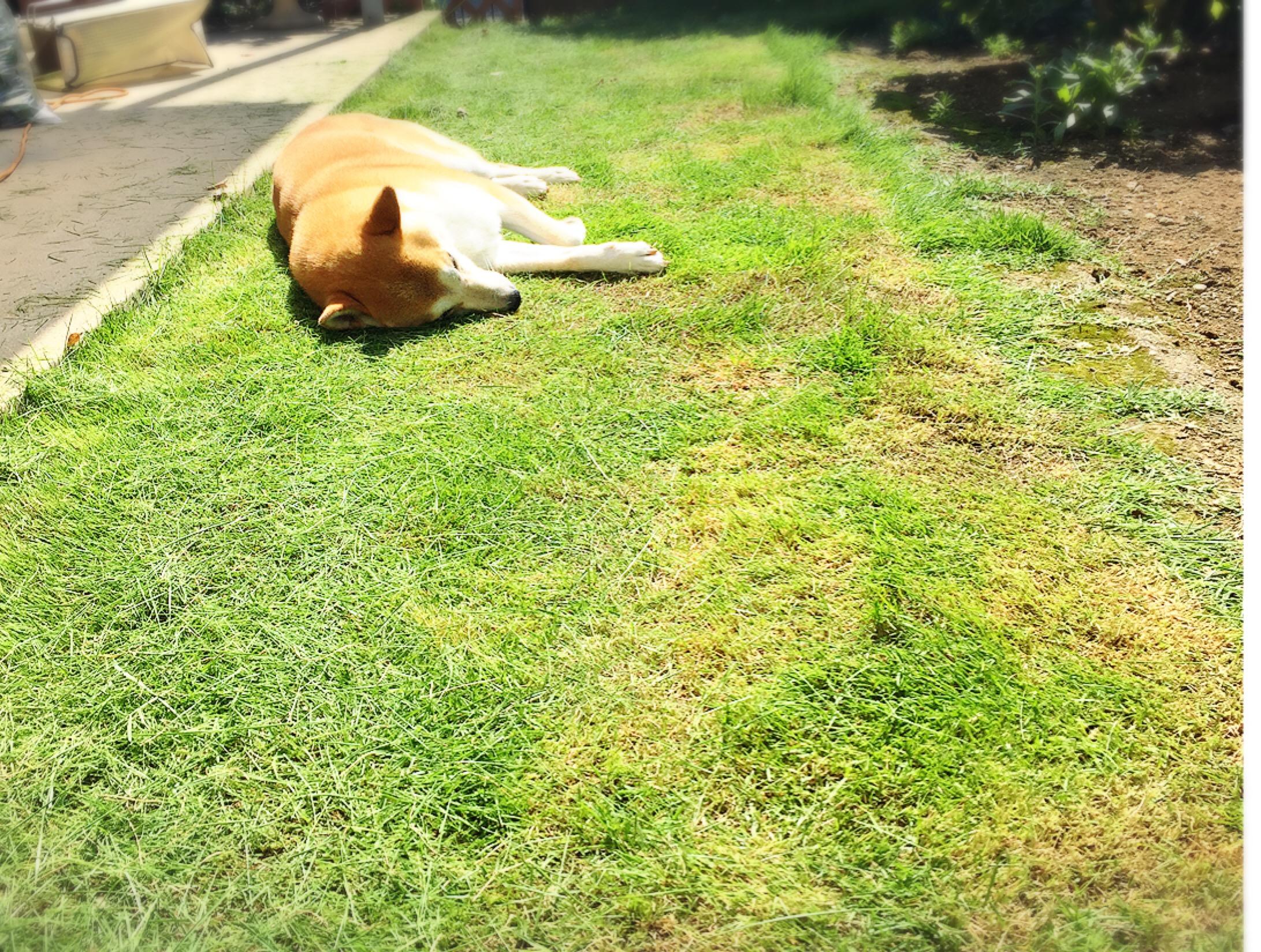 芝生の成長記録(張り替えから4ヶ月経過)