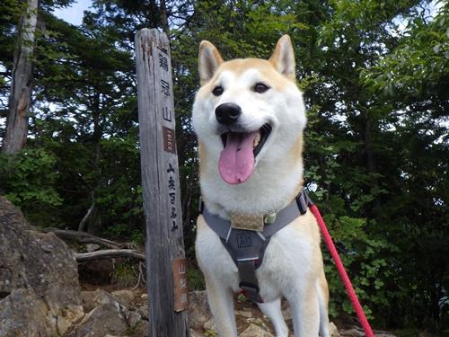 黒川鶏冠山登山①(柳沢峠→山頂)