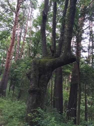 穂坂自然公園17