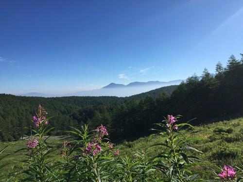 入笠山26