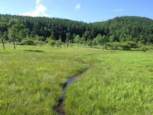 大阿原湿原2