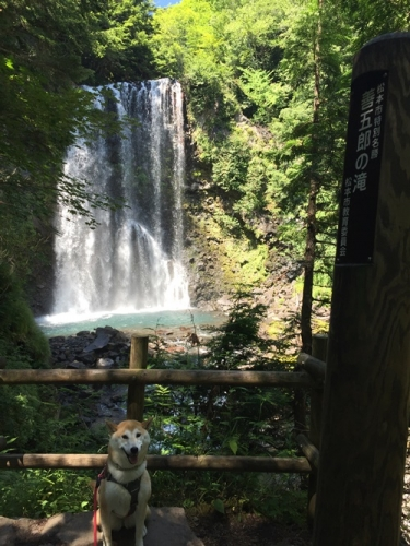 善五郎の滝22